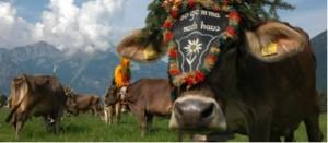 Herbstlicher Almabtrieb in Tirol
