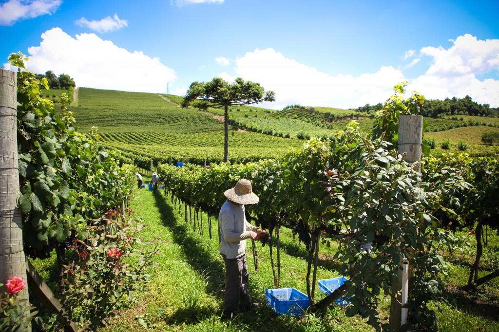 """Im """"vale dos vinhedos"""" sind die Winter kalt (mit etlichen Tagen Frost) und die Sommer heiß:  """"Regnet es während der Erntezeit, dann schaffen wir es nicht Top-Weine zu produzieren""""."""