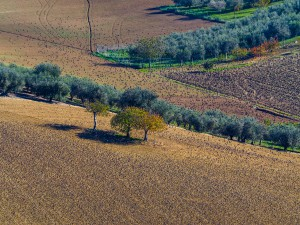 Die MARKEN in Italien